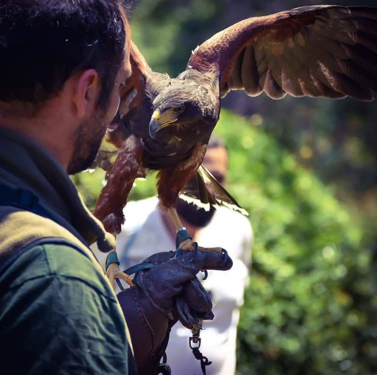 ancient-greek-falconry
